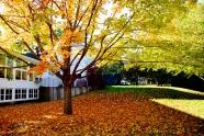 Fall folliage outside the Roth Center
