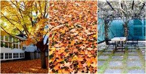 Fall Foliage and Sukkah at Hillel